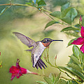 Bonnie Barry - Summer Garden Hummingbird
