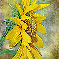 Kaye Menner - Sun Shower on Sunflower