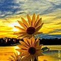 Bruce Nutting - Sunflower at Sunset