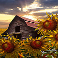Debra and Dave Vanderlaan - Sunflower Dance