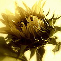 Janine Riley - Sunflower - Fare thee...