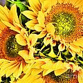Diana Sainz - Sunflower Me Up by Diana...