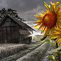 Debra and Dave Vanderlaan - Sunflower Watch