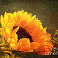 Lianne Schneider - Sunflower - You Are My...