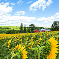 Regina Geoghan - Sunflowers and Farmhouse