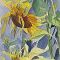 Joan Willoughby - Sunflowers With An...