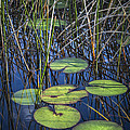 Debra and Dave Vanderlaan - Sunlight on the LilyPads