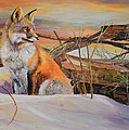 Alvin Hepler - Sunrise Red Fox