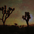 Sandra Selle Rodriguez - Sunset at Joshua Tree