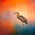 Jai Johnson - Sunset Heron