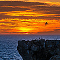 Alexandre Martins - Sunset in Cabo Carvoeiro...
