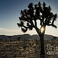 Sandra Bronstein - Sunset in Joshua Tree...