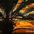 Michael Hoard - Sunset Palm In New...