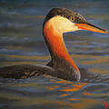 Marcus Moller - Sunset Red-necked Grebe