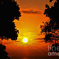 Diana Sainz - Sunset Silhouette by...