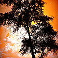 Miss Dawn - Sunset Tree