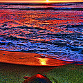 Diana Sainz - Sunset Turtle by Diana...