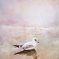 Theresa Tahara - Sunset With Young Seagull