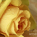 Inspired Nature Photography By Shelley Myke - Sunshine Delight Yellow...