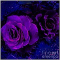 Barbara Griffin - Surreal Purple Rose