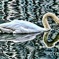 Diana Sainz - Swan on Lake Eola by...