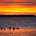 Ralf Kaiser - Swans In The Sunrise