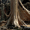 Bob Christopher - Ta Prohm Cambodia