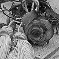 Sandra Foster - Tassels And Roses Beauty