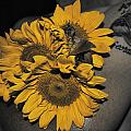Cindy Nunn - Tattoos and Sunflowers
