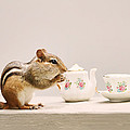 Peggy Collins - Tea Party with Chipmunk