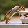Peggy Collins - Tea Time with Chipmunk