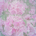 Arlene Carmel - Textured May Flowers