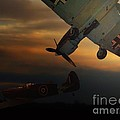 Thomas Woolworth - The Air Battle Of Britain
