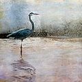 Liane Wright - The Blue Heron Looks On