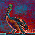 Janice Rae Pariza - The Bold Colored Pelican