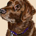 Lois Ivancin Tavaf - The Chocolate Lab