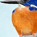 Melissa Nankervis - The Colourful Kingfisher
