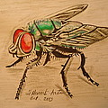 Fladelita Messerli- - The fly