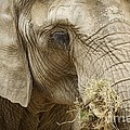 Inspired Nature Photography By Shelley Myke - The Gathering - Elephant...