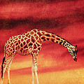 Angela Doelling AD DESIGN Photo and PhotoArt - The giraffe