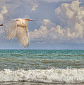 Kathy Baccari - The Great Egret And The...
