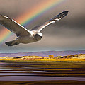 Janis Knight - The Gull and the Rainbow