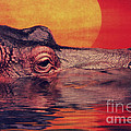 Angela Doelling AD DESIGN Photo and PhotoArt - The hippo
