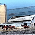 Cheryl Cencich - The HOrse Barn