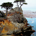 Glenn McCarthy Art and Photography - The Lone Cypress -...