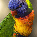 Scott Terry - The Lorikeet That Posed
