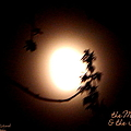 Bobbee Rickard - The Moon and the Tree