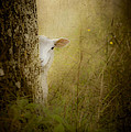 Loriental Photography - The Shy Lamb