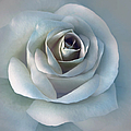 Jennie Marie Schell - The Silver Luminous Rose...