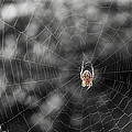 Mary Lee Dereske - The Spider